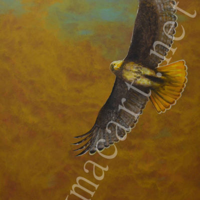 Red-Tailed Hawk (46x36) inches